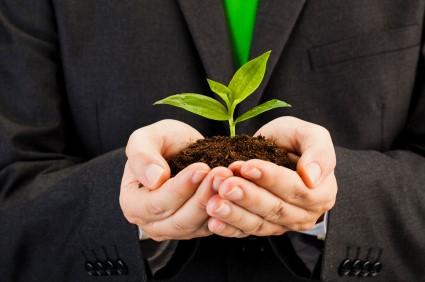 Green shoots image