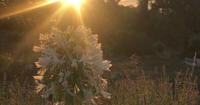 Sun on flower